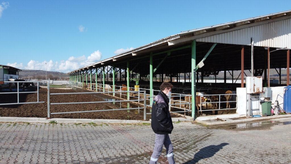 İnek Çiftliği Güneş Enerjisi Santrali temizlik işletme bakım